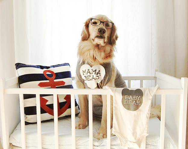 Crib Intruder! - 112 Baby Announcement Ideas Perfect to Grace Your Instagram | Baby Journey Blog