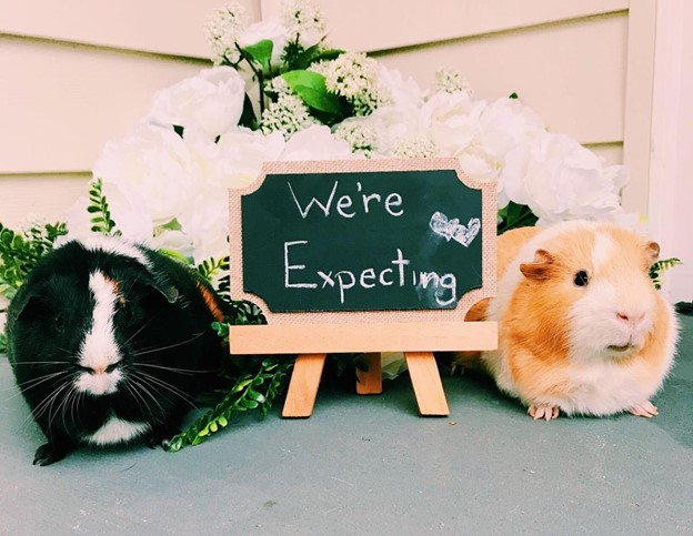Use the Guinea Pig - 112 Baby Announcement Ideas Perfect to Grace Your Instagram | Baby Journey Blog