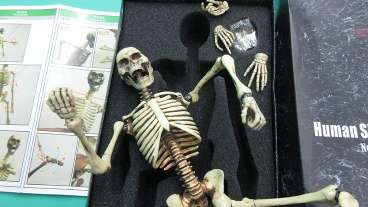 Skeleton Toy Set | Halloween Gifts for Kids | Baby Journey