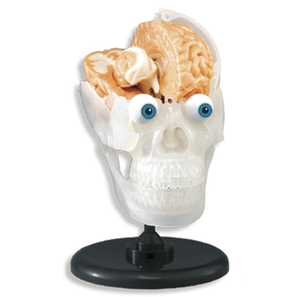 Scary Brains Toys | Halloween Gifts for Kids | Baby Journey